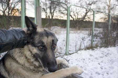 Manipulador de forzar a un perro a saltar, mientras que se busca subrayó. escena de invierno al aire libre, el concepto de maltrato a los animales.