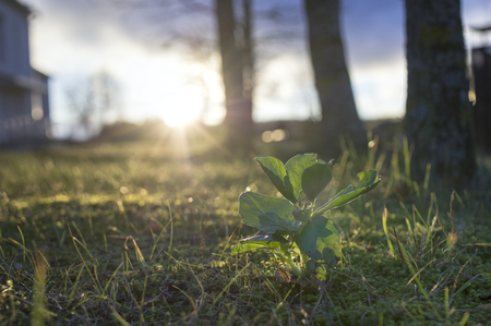 A plant against the sunrise, concept of new life. Outdoor urban scene.