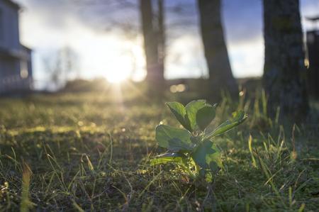 Una planta en contra de la salida del sol, el concepto de una nueva vida. Escena urbana al aire libre.