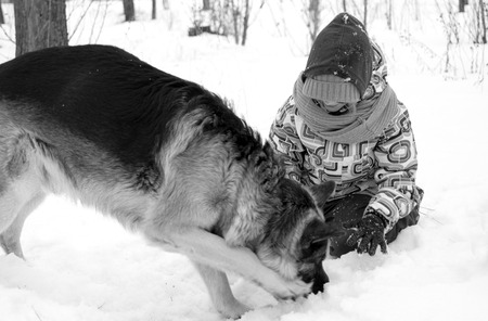 alsatian: Little girl playing with Alsatian sitting in the snow, blurred motion on the dog, focus on the girl. In  black and white