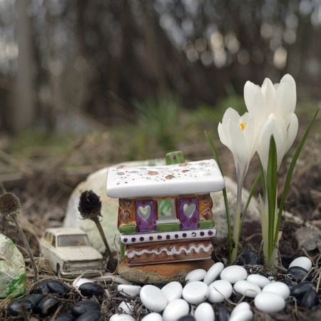 man made structure: Sweet toy house made of porcelain, beautiful crocuses and car parked behind it, selective focus macro shot