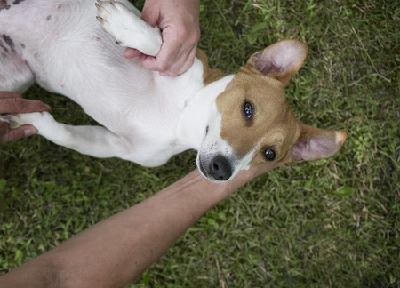 An injured ot disabled dog and human hands giving some help, overhead shot with selective focus Stock Photo