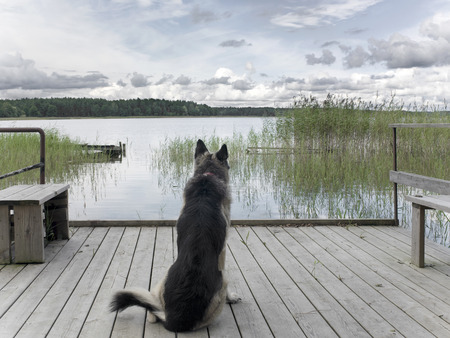 shepherd dog: A lonely shepherd dog, sitting on the jetty. Outdoor filtered shot, concept of dog devotion