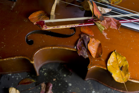 cellos: Cello laid on a ground, covered with autumn leaves, a bow in focus in the foreground. Studio closeup