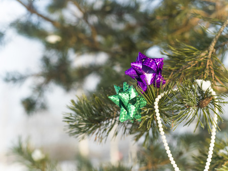 focus shot: Closeup of the colorful bows hanging on a winter pine tree, outdoor selective focus shot Stock Photo