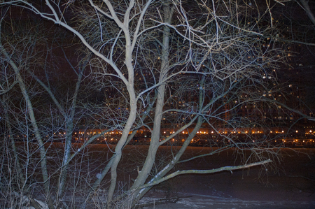 tress: Frozen tress in the foreground and a city light in the blurred background, outdoor filtered night shot