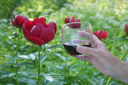 Female hand clinking a wine glass with beautiful red flower, outdoor cropped filtered photo Stock Photo