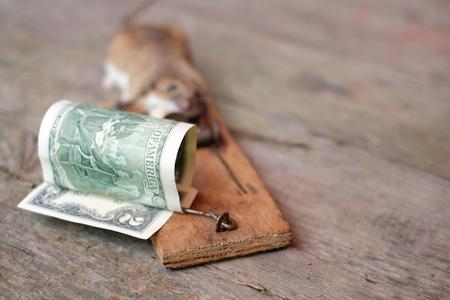 Ein Dollarschein und ein Mose gefangen, geringe Schärfentiefe Schuss, Konzept der Risiken in der Wirtschaft Standard-Bild - 83652204