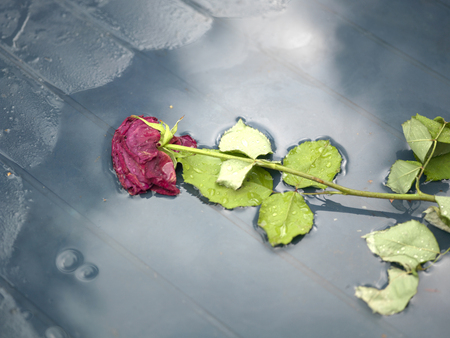 table top: Abandoned Rose On Table Stock Photo