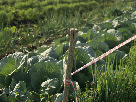 prohibido el paso: Growing vegetables on a private bed and warning tape on the wooden stick