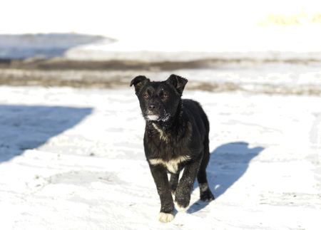 A puppy, seems lost, standing on the snow. Outdoor shot