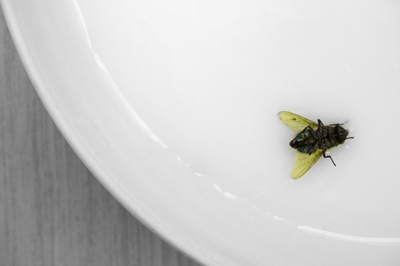 Selective color shot of a dead fly on saucer, above view