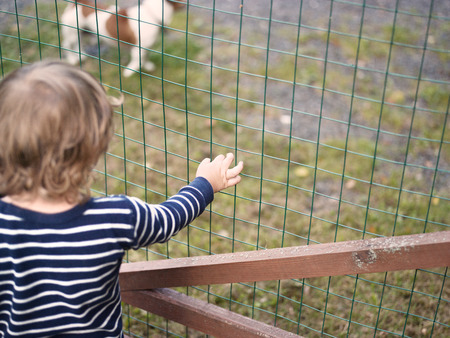 A child looking at the dog behind the fence, outdoor cropped shot with particular focus Stock fotó