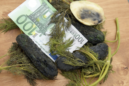A hundred euro banknote on a top of spoiled vegetables, studio close-up