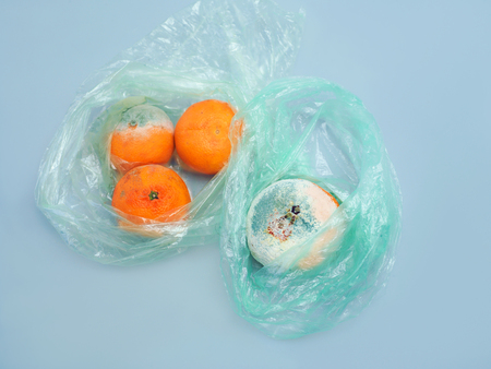 Mold on the out of date tangerines, studio still on blue
