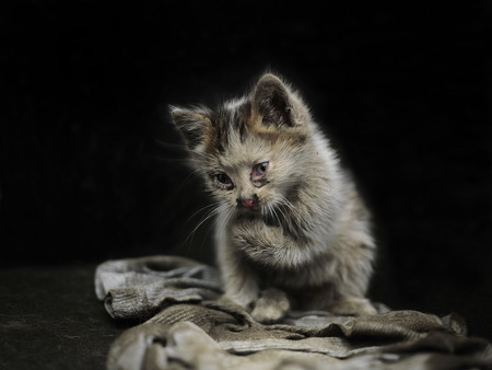 A dirty stray kitten seems unwell or infectced posing against the blroundack backg 免版税图像