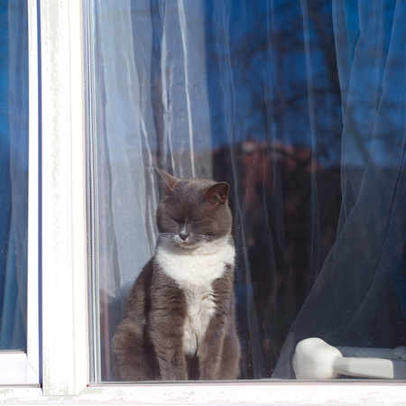 A cat basking in the sun sitting behind a window, outdoor square shot Standard-Bild