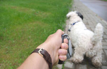 Un chien en laisse tirant un maître, gros plan extérieur