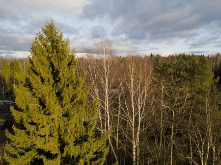 Fir tree and bare birch tops against the sunny autumn sky, bird eye view Archivio Fotografico - 133380072
