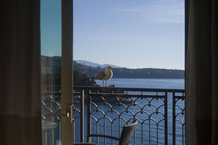 A seagull sitting on a balcony handrail, outdoor shot