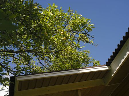 Brand new roof and a branch of apple tree against the blue sky