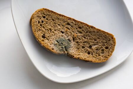 A moldy bread on a white plate, indoor close up image