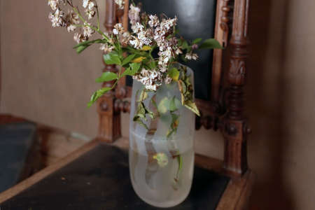 Vase with faded plant placed on vintage chair, indoor still life