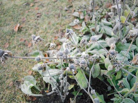 Frozen plants in late autumn, outdoor macro shot, shallow depth of field