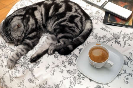 Unmade bed with a coffee cup, sleeping cat and home related objects in the background