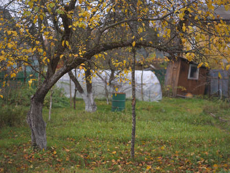 Apple tree supported with stick, autumn outdoor shot Stock Photo