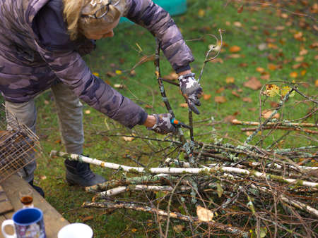 Woman cutting tree branch with garden scissors, outdoor shot