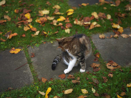A cat cleaning itself while sitting on a footpath in autumn garden