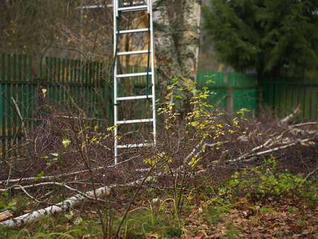 A frontyard with a fallen birch tree and a ladder in the background, autumn outdoor shot Stock Photo