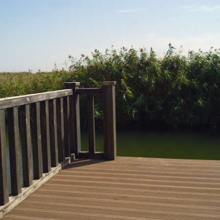 a wooden pier or bridge against the reeds, outdoor shot