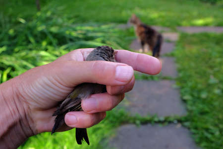 A hand gripping a rescued bird, a cat in the blurred background