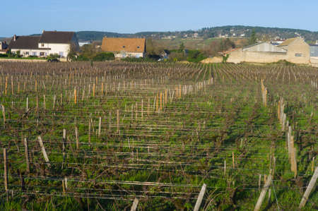 Vineyards in springtime with a small town in the background