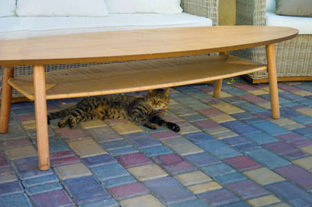 a cat hiding from a heat under the table, outdoor shot