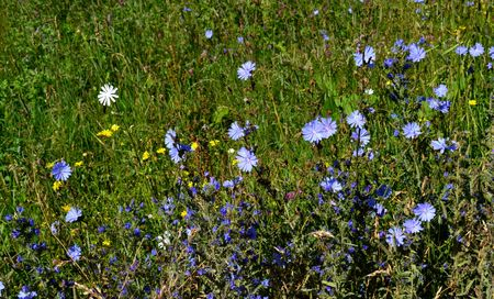 potherb: The nature of the Caucasus, the flowers in the Teberdinsky reserve. Photo taken on: July 27, Saturday, 2013