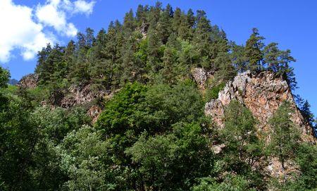 potherb: Mountain vegetation. Mountain forest against the blue sky. Teberda reserve, - in the city district Karachay Karachay-Cherkessia, Russia. Photo taken on: July 27, Saturday, 2013