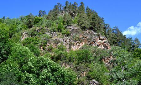 greenness: Nature and beauty of the mountains. Mountain vegetation. Karachay-Cherkessia, Russia. Photo taken on: July 27, Saturday, 2013