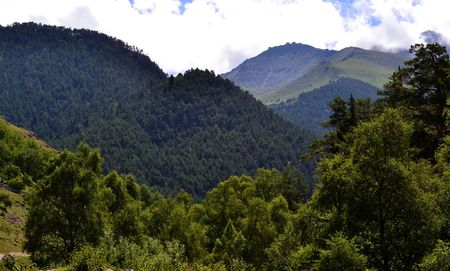vertices: Mountain vegetation Caucasus. Photo taken on: July 27, Saturday, 2013