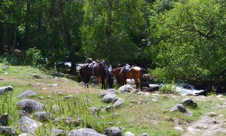 potherb: Horses near the river and forest. Karachay-Cherkessia, Russia. Photo taken on: July 27, Saturday, 2013