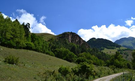 potherb: On the slopes of the Caucasus. On the mountain expanses. Photo taken on: July 27, Saturday, 2013