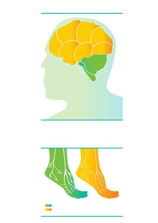 nerve fibers: Medical vector info-graphic. Human body vector design. Illustration
