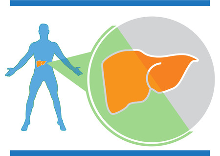 human liver: Liver medical info-graphic. Human body.