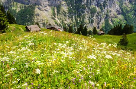 Beautiful Landscape view of Charming Murren Mountain Village with Lauterbrunnen Valley and Swiss Alps in background, Jungfrau region, Bernese Oberland, Switzerland, Europe