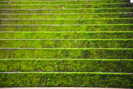 Bright green mossy stone stair steps uphill background in autumn season. Architectural decoration design, Plant covering, natural micro life organism concept