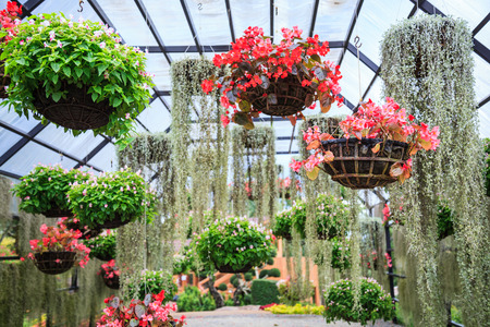 varieties of blooming colorful plants and flowers in hanging flower pot in tropical ornamental indoor garden in natural park. Landscaped Architecture background, home nature decorating  design concept