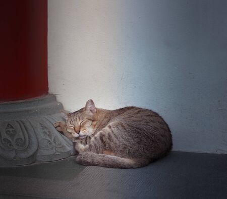 Stray mixed breed black striped street cat sleeping against white stone concrete wall under the building shady background. Street Animal Photo, Homeless Cat Adoption, Cat Care and Sympathy concept