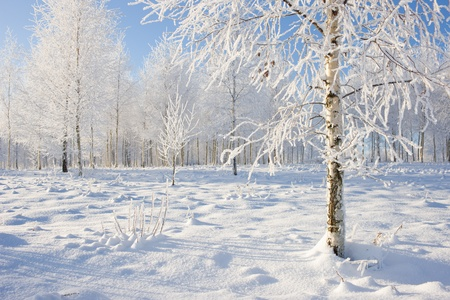 Frozen tree on winter field and blue sky Stock Photo - 9439373